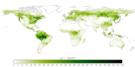 Worldwide Leaf Area Index
